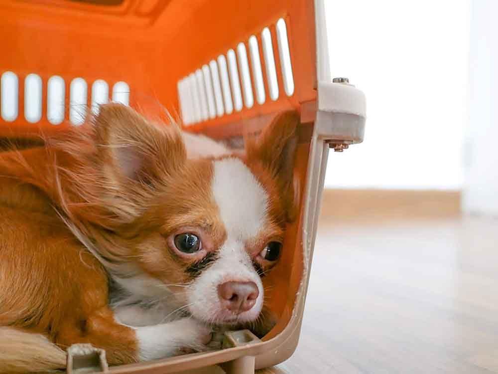 Le départ d'un membre de la famille peut rendre un chien anxieux.