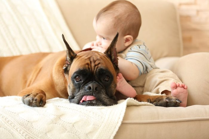 L'arrivée d'un bébé dans la famille peut rendre votre chien anxieux.