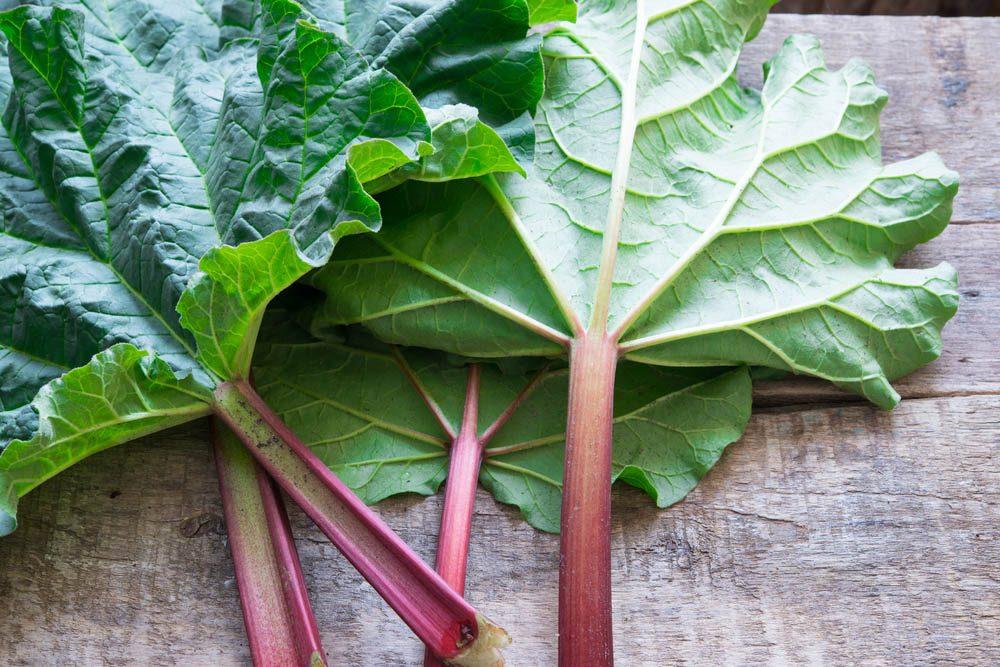 Aliments dangereux : les feuilles de rhubarbe, consommée en grande quantité, peuvent être toxique.