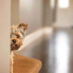 Votre chien est anxieux: 9 raisons peuvent expliquer son comportement