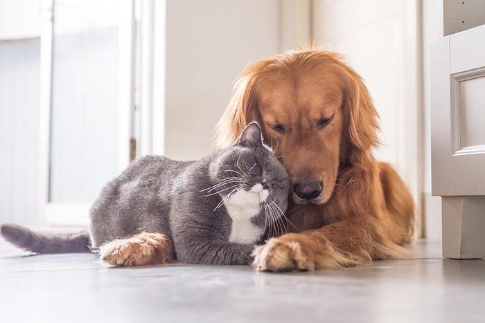 Conseil de vétérinaire : économisez avec une assurance.