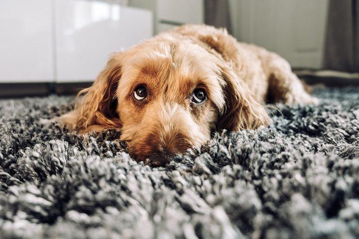 Conseil de vétérinaire : faites attention aux excès alimentaires.