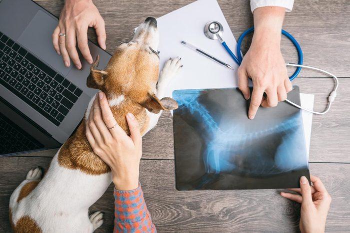 Conseil de vétérinaire : choisissez la bonne clinique.