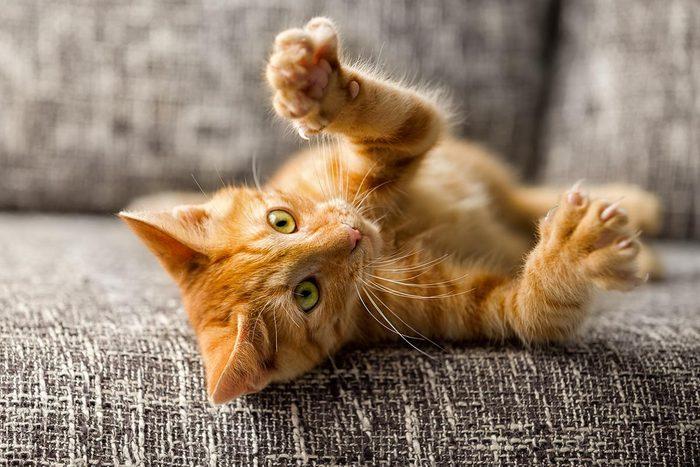 Conseil de vétérinaire : évitez de faire dégriffer votre chat.