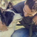 13 conseils pour aider votre animal de compagnie à bien vieillir