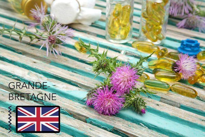 Gueule de bois : en Grande-Bretagne, mangez du Chardon-marie