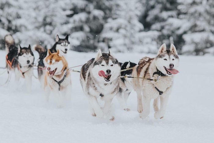 En hiver, faites du chien de traîneau à Anchorage en Alaska.