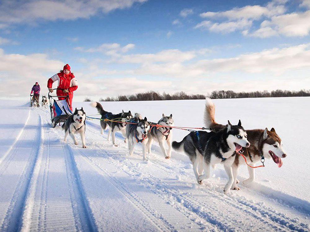 Devenez meneur de chiens en Saskatchewan pour profiter de l'hiver au Canada.