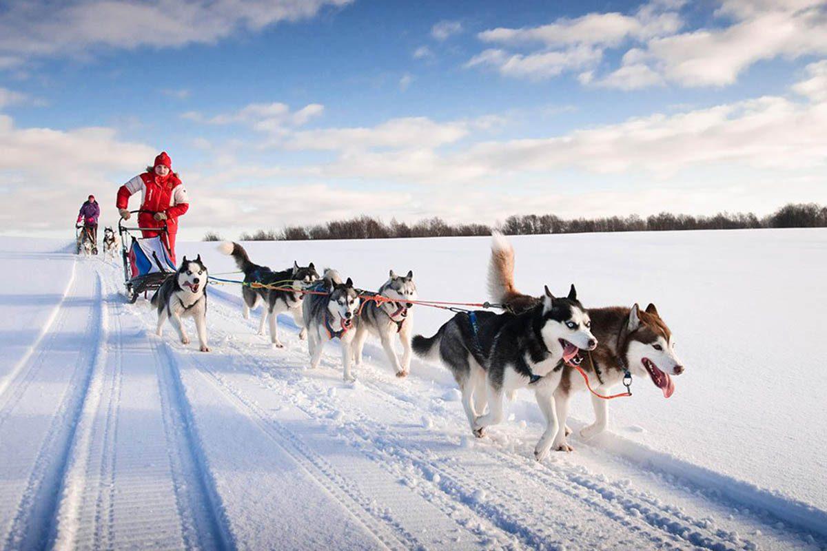 Hiver au Canada : devenez meneur de chiens en Saskatchewan.