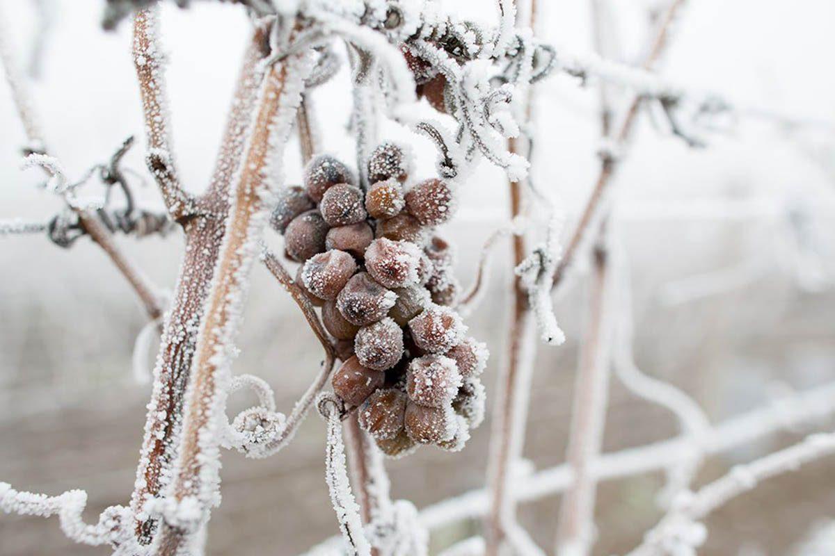 Hiver au Canada : portez un toast à l'hiver avec le vin de glace de Niagara-on-the-Lake.