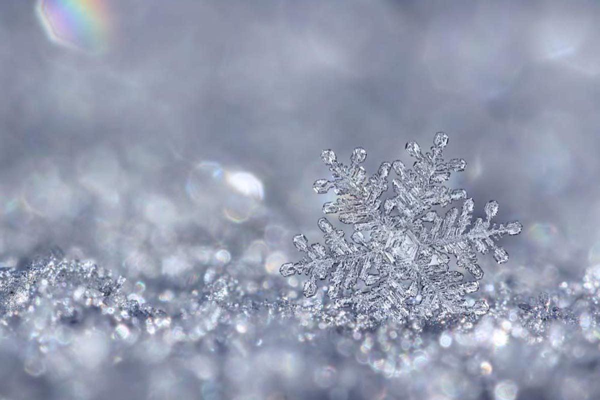 Les flocons de neige ont six branches.