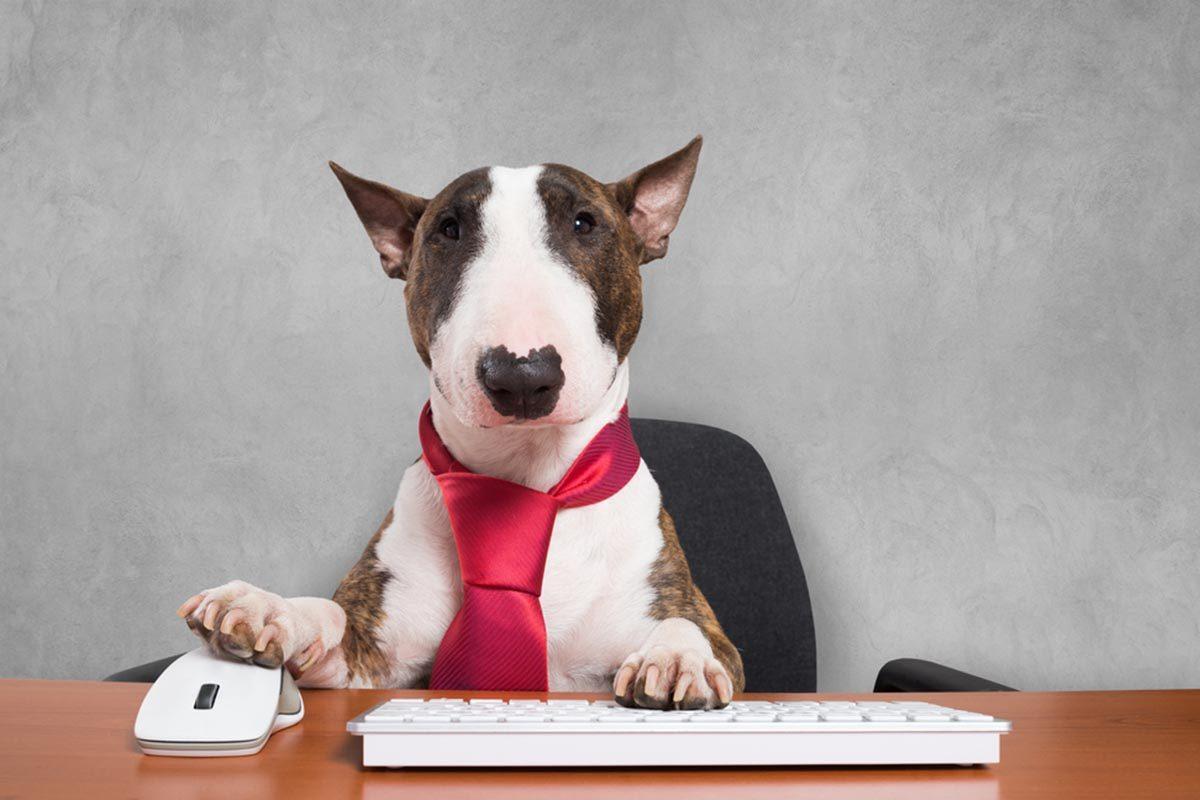 Photo de chien : une présentation qui manque de mordant.