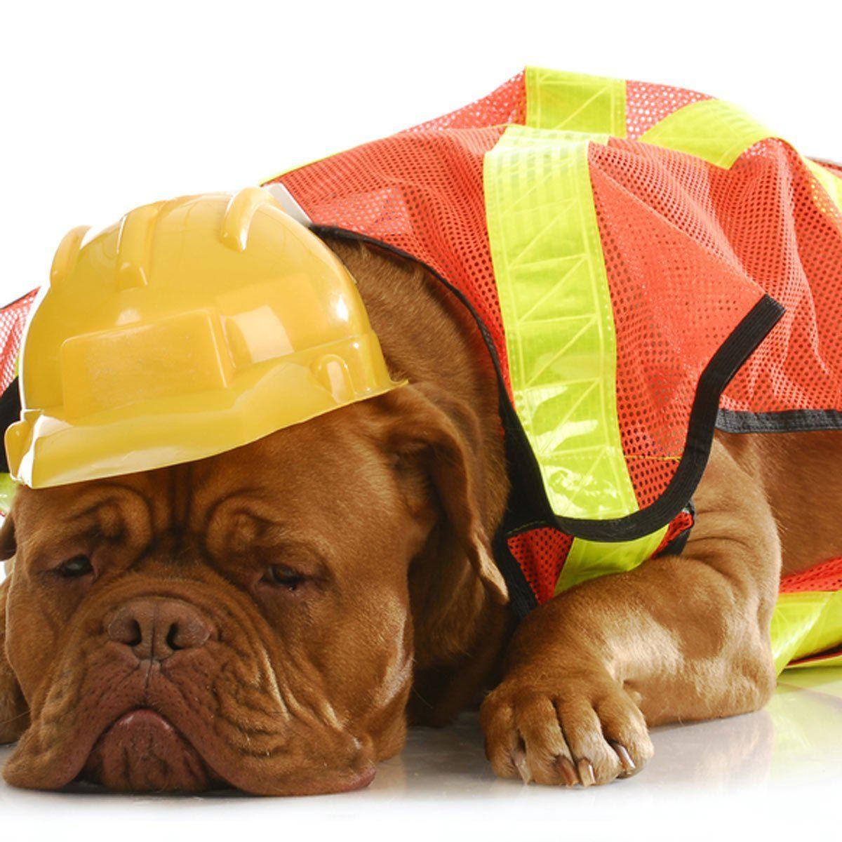 Photo de chien : dur de passer ses nuits à surveiller un chantier.