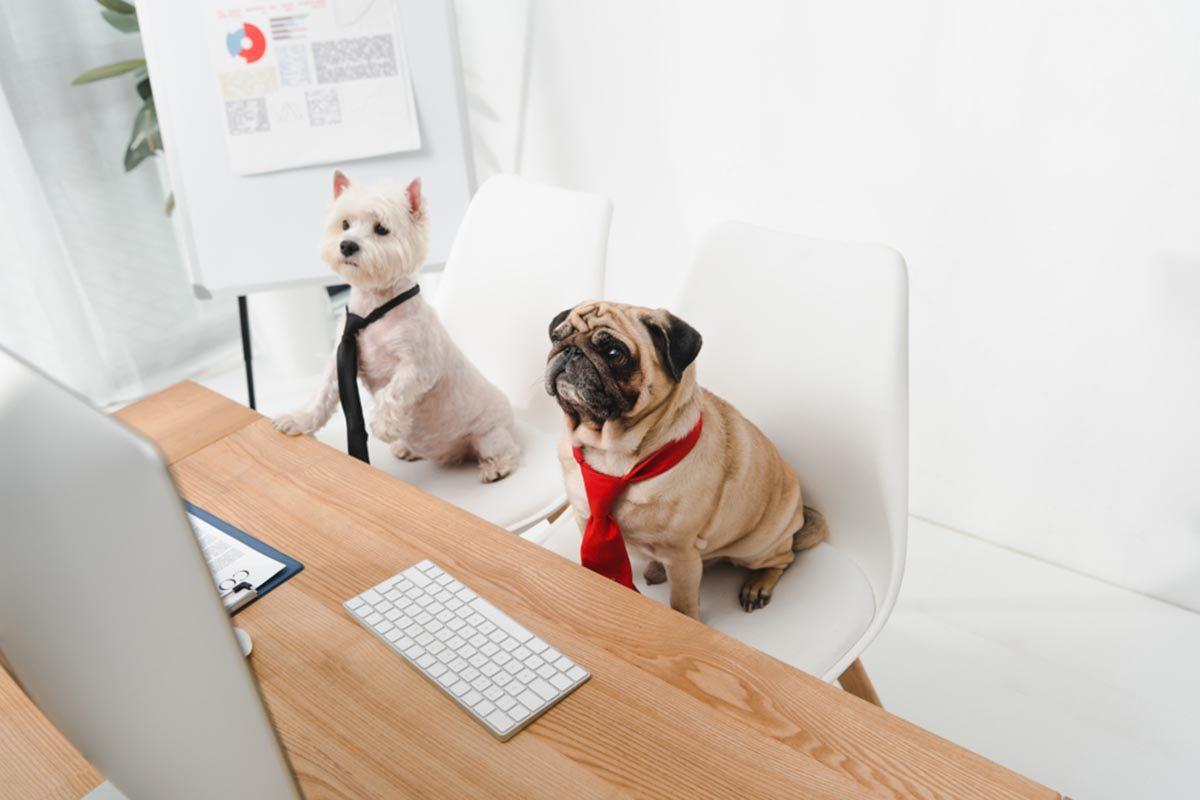 Photo de chien : deux informatichiens génies de la programmation.