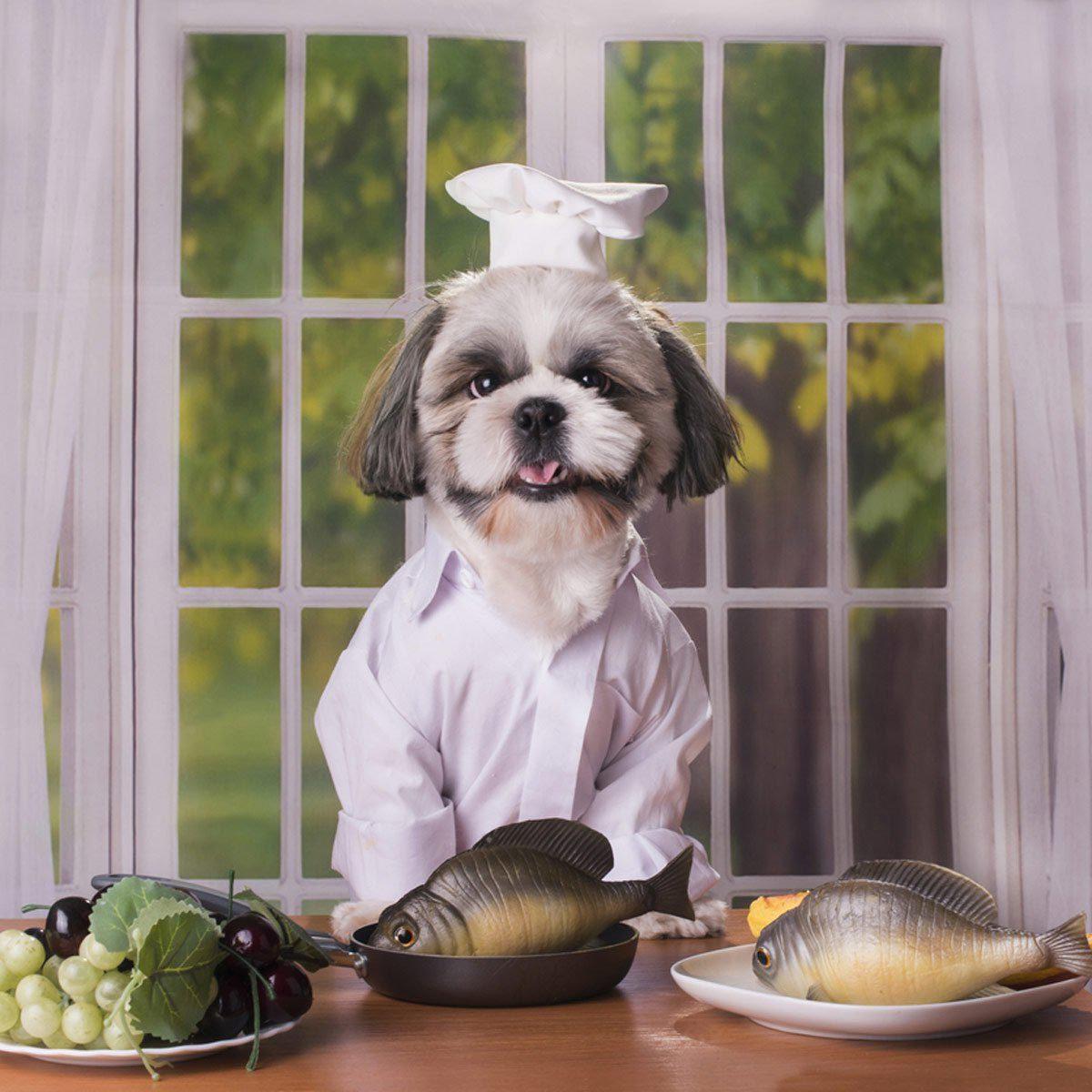 Photo de chien : shih Tzu, sashimi et sushi.