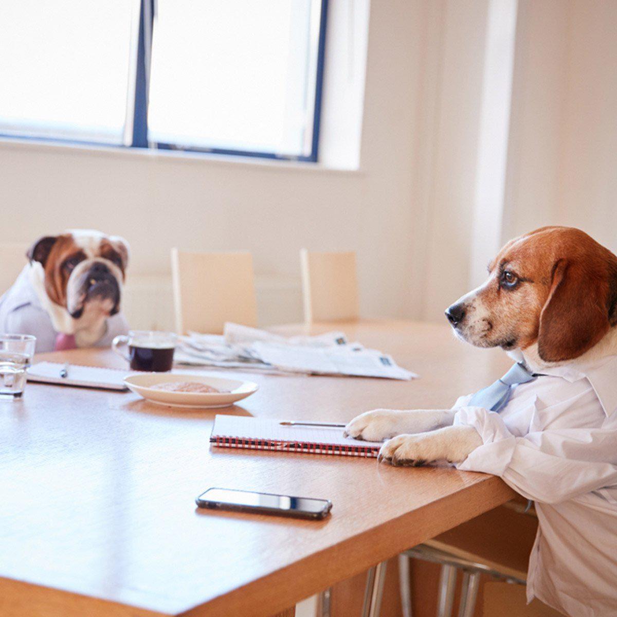 Photo de chien : déguisement de bureau.