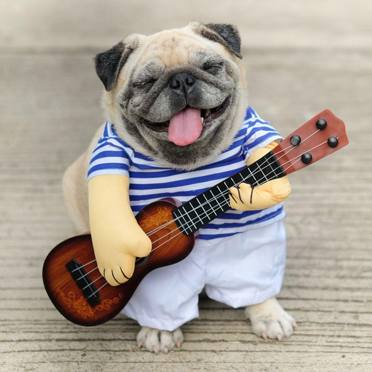 Photo de chien : musichien et son ukulélé.