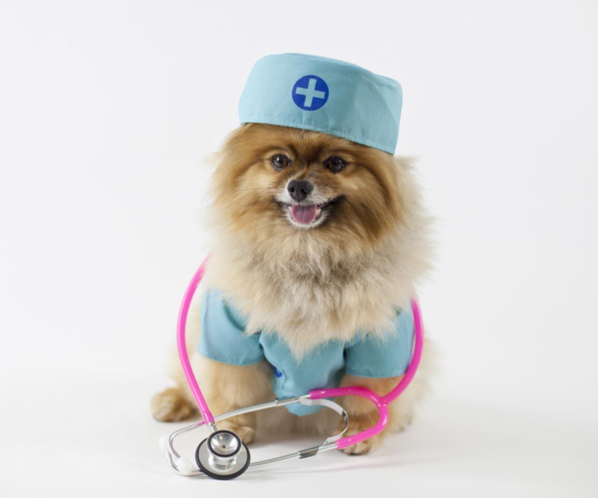 Photo de chien : une infirmière qui a du chien.