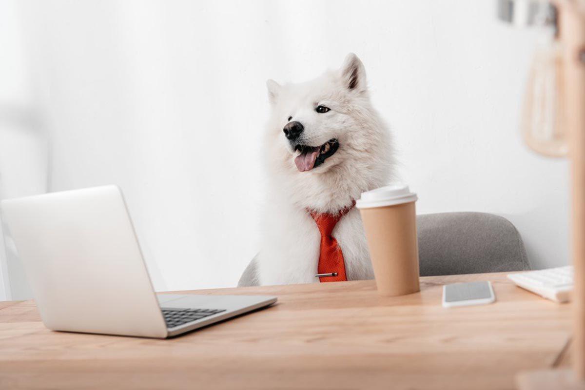 Photo de chien déguisé en employé de bureau.