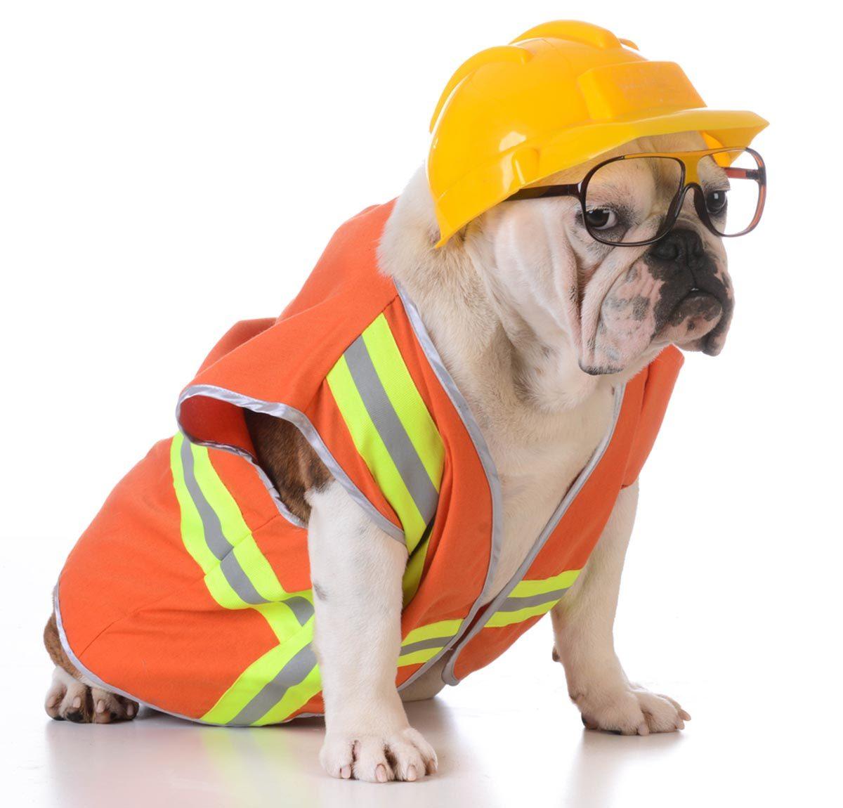 Photo de chien portant un déguisement de travailleur de chantier.