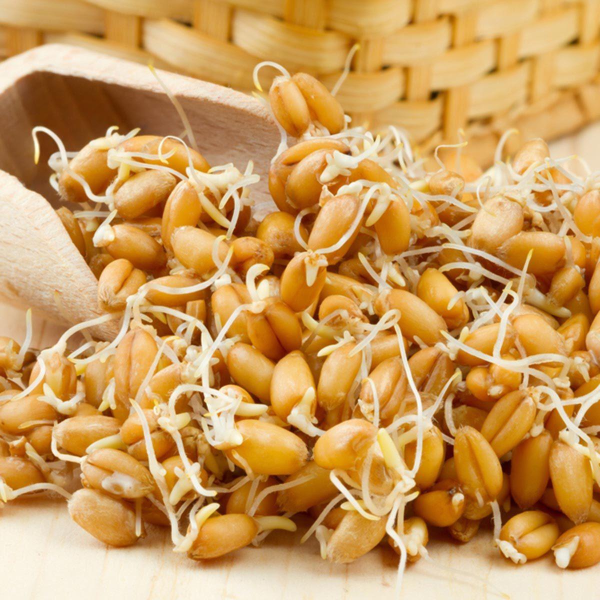 Des protéines végétales peuvent être ajoutées à votre smoothie avec des germes de blé.
