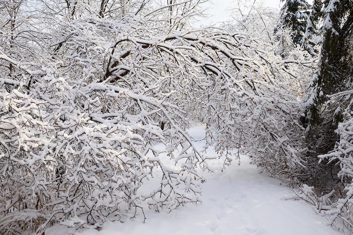 La tempête de neige de décembre 1944 est mémorable.