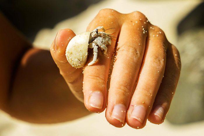L'animalerie déconseille aux enfants les bernard l'hermite.