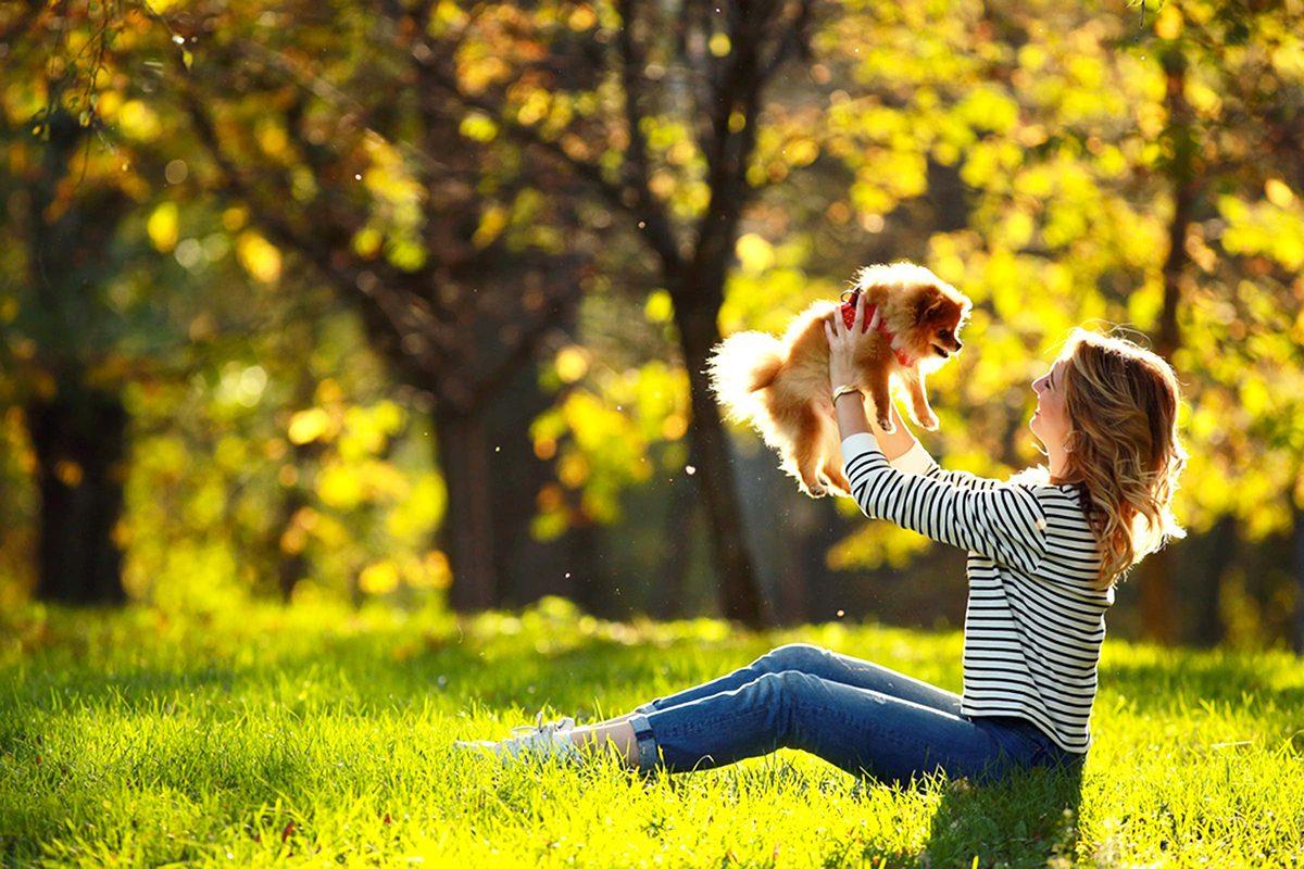L'animalerie considère que les petits chiens sont les plus agressifs.