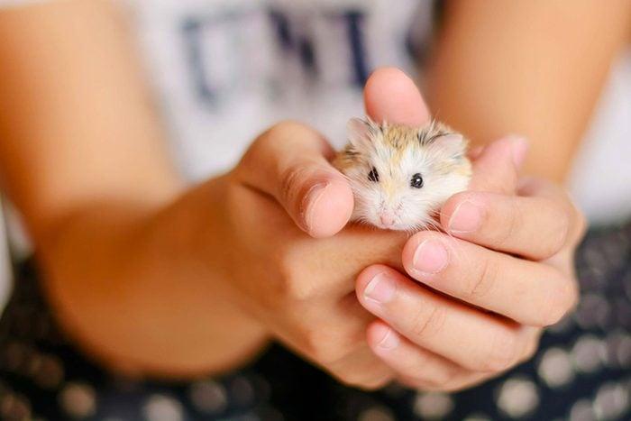 L'animalerie considère que les petits hamsters sont agressifs.