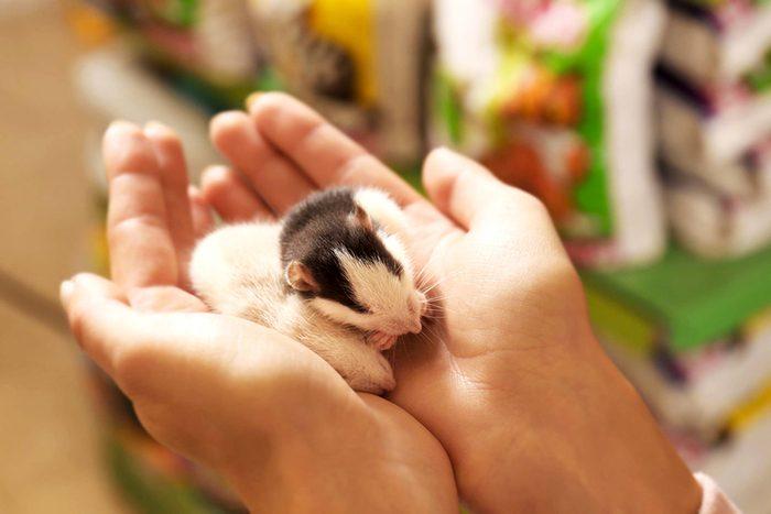 L'animalerie considère les rats comment les meilleurs petits animaux.