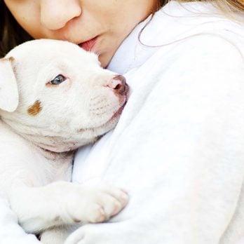 Vétérinaire: les frais de santé de votre animal préféré