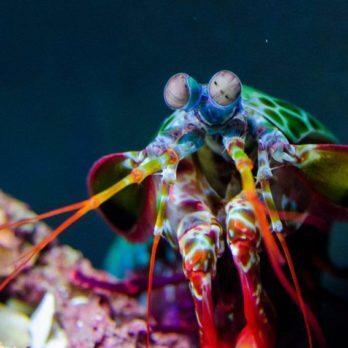 23 animaux parmi les plus colorés de la planète