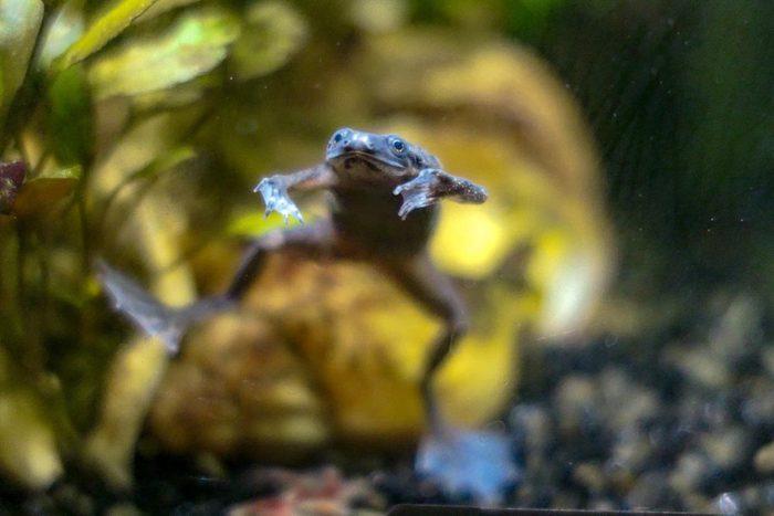 Animaux de compagnie : les grenouilles sont porteuses de bactéries.