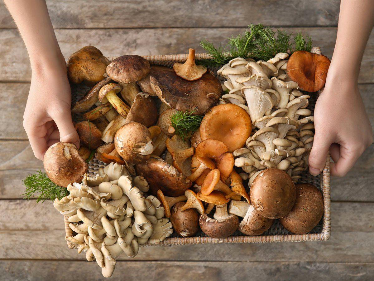 Le champignon stimule la concentration.