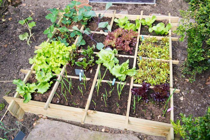 Pour économiser, faites pousser vos propres fruits et légumes.