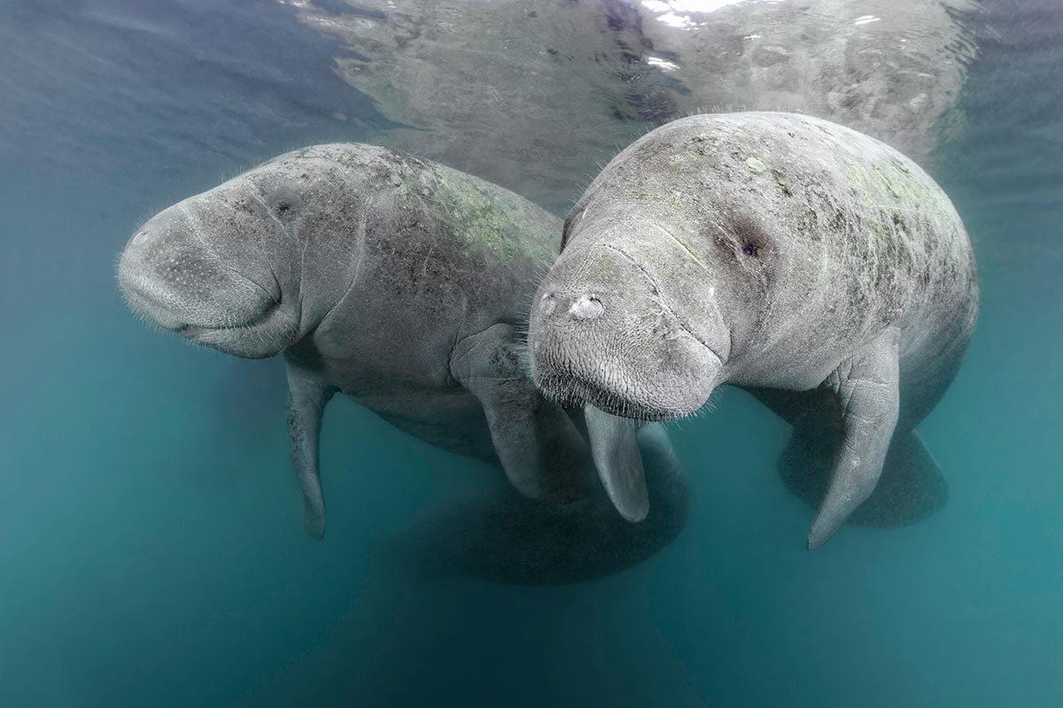 16 espèces menacées qui ont échappé à l'extinction ...