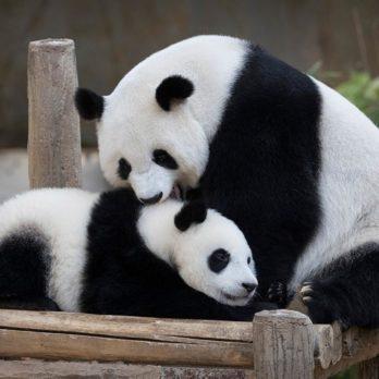 16 espèces menacées qui ont échappé à l'extinction