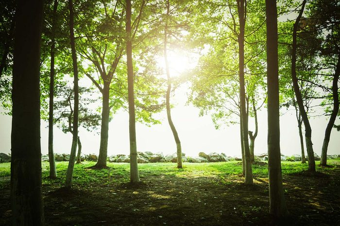 L'espérance de vie peut augmenter en passant du temps dans la nature.