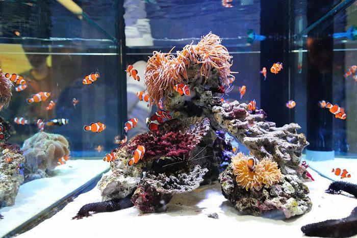 Un aquarium est facile à pirater.