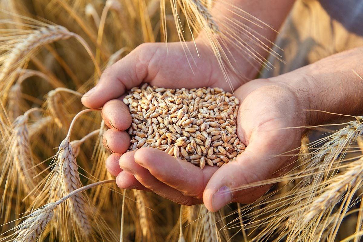 Le grain entier contient plus de nutriment.
