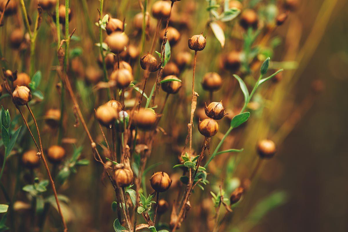 La graine de lin est une source de magnésium.