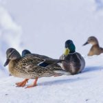 20 expressions pour parler de la météo d'hiver