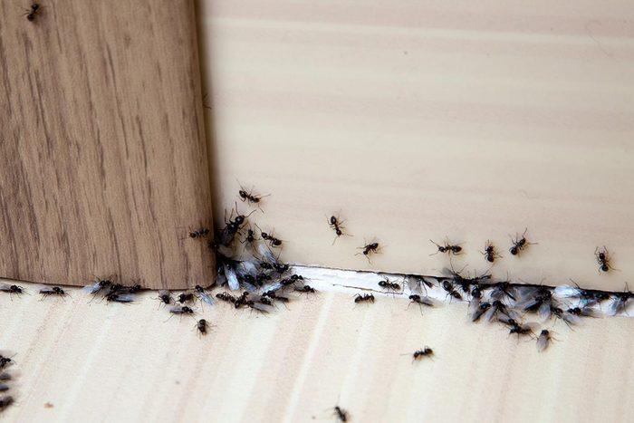 Astuce pour nettoyer : éliminez les insectes avec du bicarbonate.