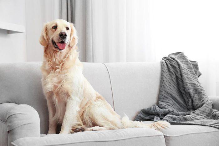 Vous pouvez nettoyer les poils de chien avec une éponge humide.
