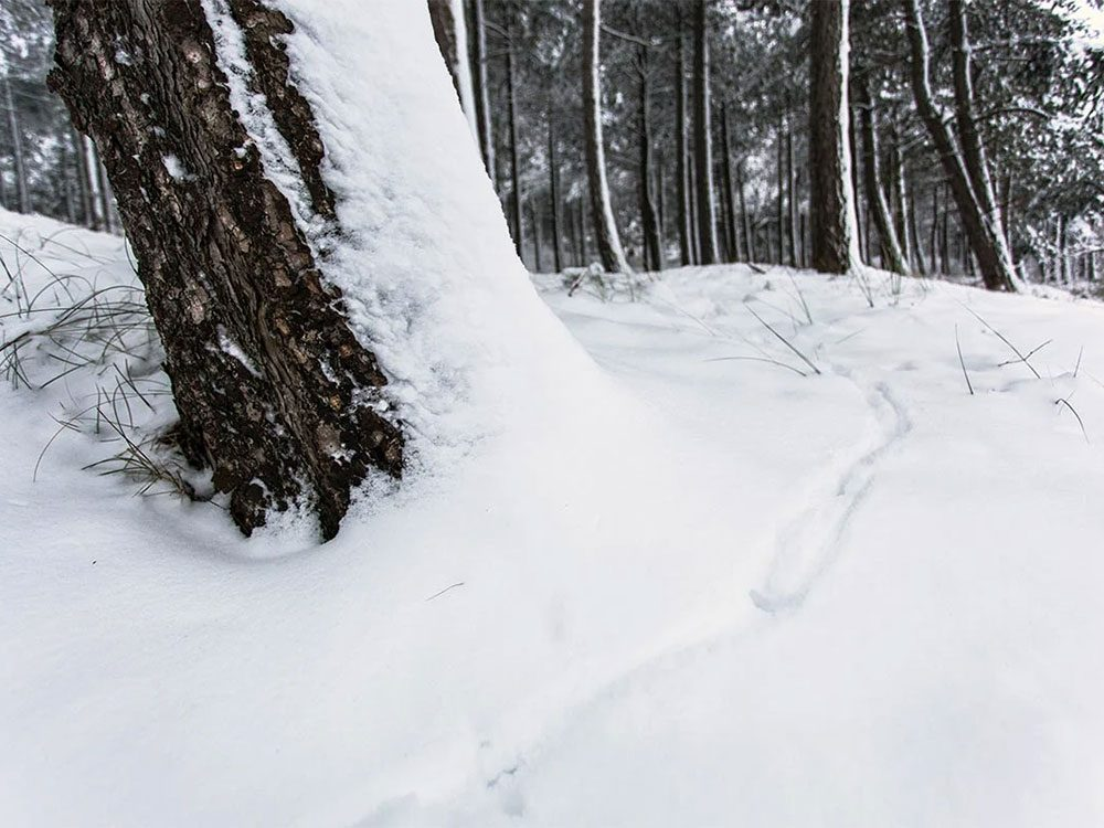 En octobre 1998 s'est déroulée l'une des pires tempêtes de neige du Québec et du Canada.