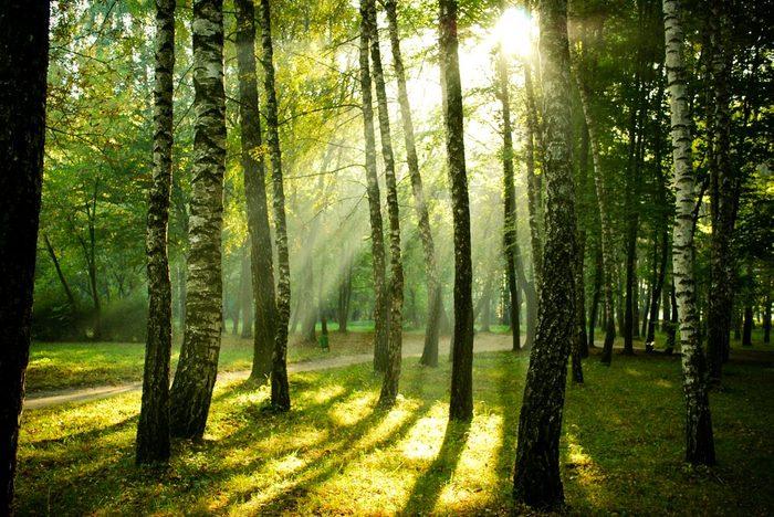 Pour mettre du calme dans votre vie, faites des promenades en forêt.