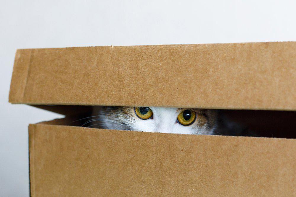Explications : pourquoi les chats aiment-ils se cacher dans des boîtes?