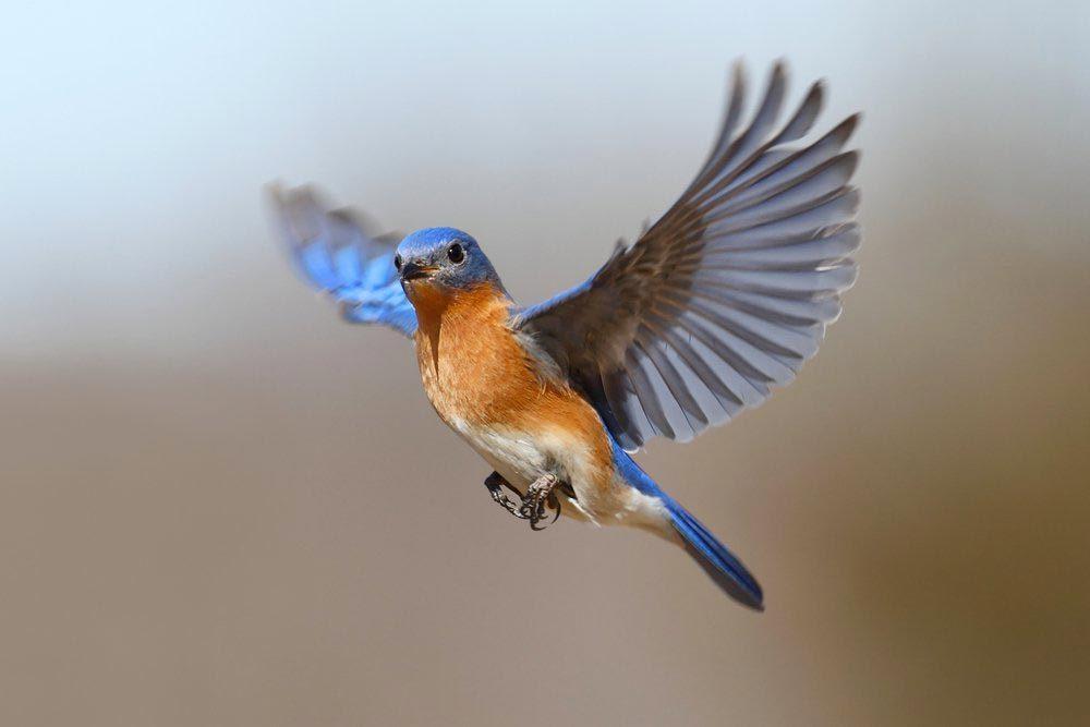 Explications : comment les oiseaux savent-ils où migrer?