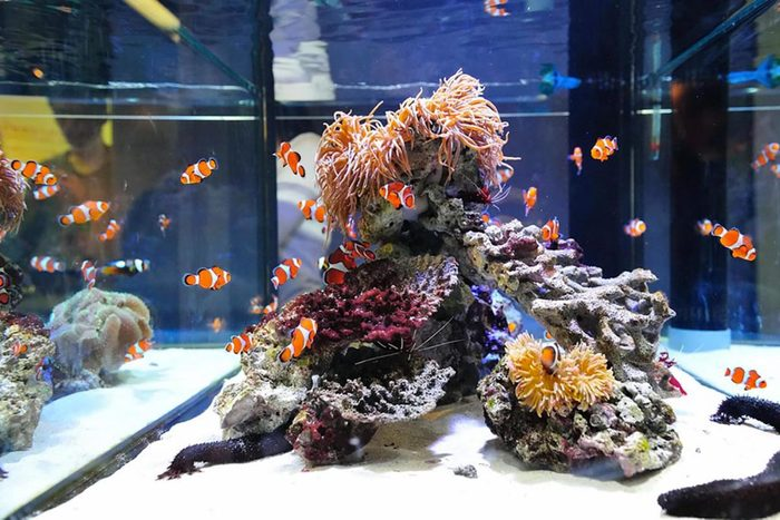 Recyclage maison : Nettoyez un aquarium avec des collants