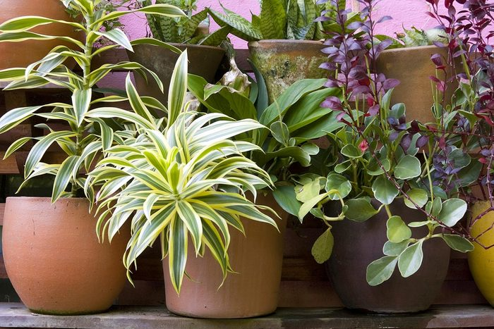 Recyclage maison : protégez vos plantes contre le gel avec des sacs en plastique